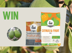 Win a feijoa planting pack